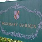 rosemary13